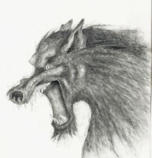 angry wolf  art pencil sketch drawing